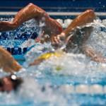 """فدراسیون شنا، آيين نامه مسابقات قهرماني شناي مسافت كوتاه رده سني بالاي 15 سال در بخش آقايان گراميداشت """"جام قهرماني ولايت"""" را اعلام کرد."""