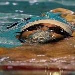 اسامی شناگران دعوت شده به اردویهای متمرکز و غیرمتمرکز تیمهای ملی برای حضور پرقدرت در مسابقات قهرمانی شنای رده های سنی آسیا( تایلند 2015 ) اعلام شد.