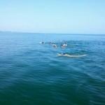 مسابقات انتخابی شنای آب های آزاد استان گیلان در ردههای سنی زیر10سال، بالای 10سال و 15 تا 30 سال در شهر لشت نشا برگزار شد.
